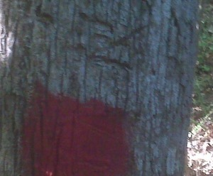 Witness Tree in Perry County, Alabama