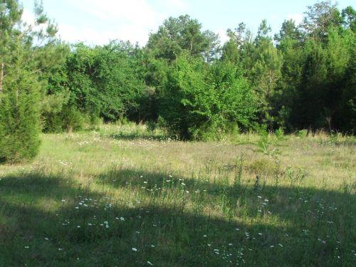 16_acre_williams_pasture_3